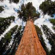 Trump plan could open Giant Sequoia monument to logging