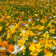 Why flowering meadows are better than lawns