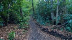 Lower Alum Cave Trail