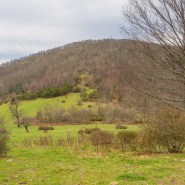 Final conservation easement on treasured land atop Bearwallow Mountain