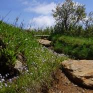 Public comment sought on trail improvement plan for Pisgah National Forest