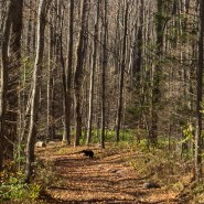 See a black bear while hiking? Don't panic; follow these steps