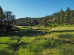 Luscious meadow