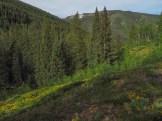Spruce-fir forest