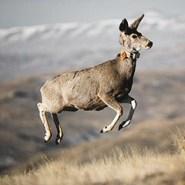 The long, strange trip of Deer 255