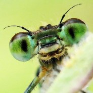 'Hyperalarming' study shows massive insect loss