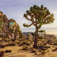Joshua Tree National Park: Into the wild, hours from L.A.