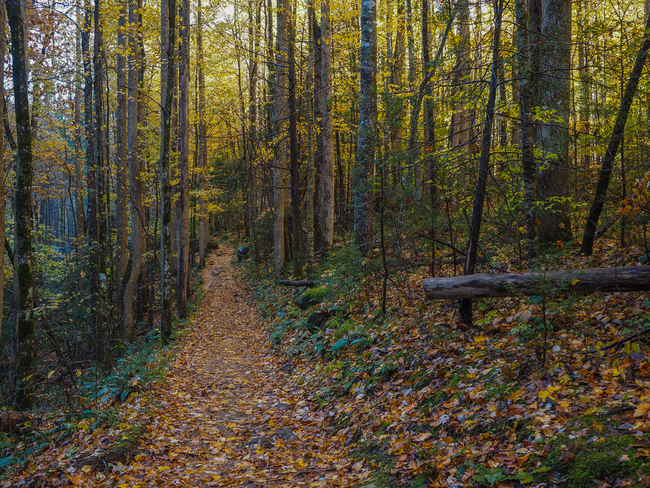 The Psychology and Science Behind How Hiking Trails Are Created