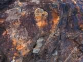 Multi-color lichen