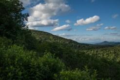 Black Balsam and Mt. Pisgah