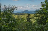 Blackberry blossoms & Mt. Pisgah