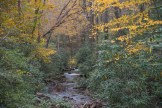 Looking Glass Creek in Pisgah National Forest from Sliding Rock