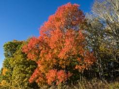 Autumn's finest found at Purchase Knob