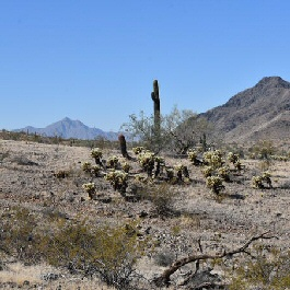 Get big views of downtown Phoenix on this less-used South Mountain hiking trail