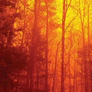 Federal Judge Refuses To Dismiss Lawsuit Over Deadly Fire At Great Smoky Mountains National Park