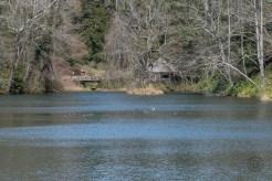 Ducks and boathouse