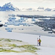 Antarctica's 'green snow' is sucking carbon out of the air