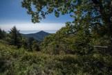 Greybeard view