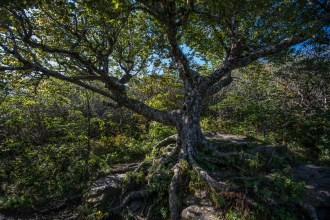 The Craggy Tree