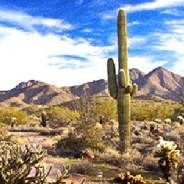 Best easy day hikes in Phoenix: 5 fun, scenic trails for beginners or advanced hikers