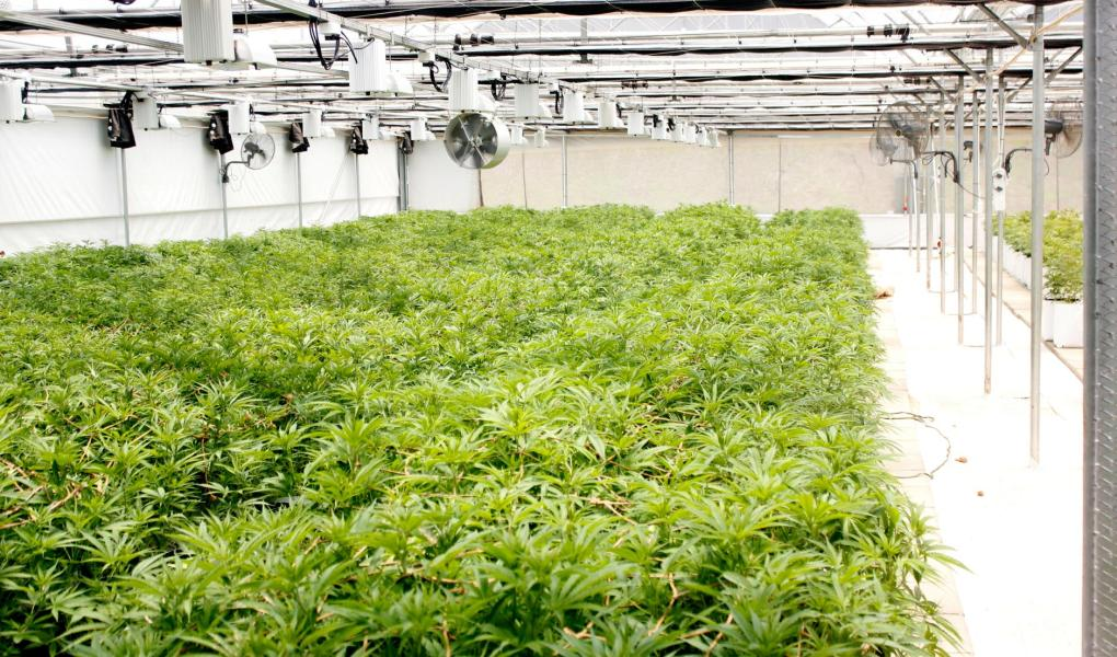 cannabis-wuhan-general-group-$wuhn-m2bio-sciences-willem-jonker-coo-interet-bull-report