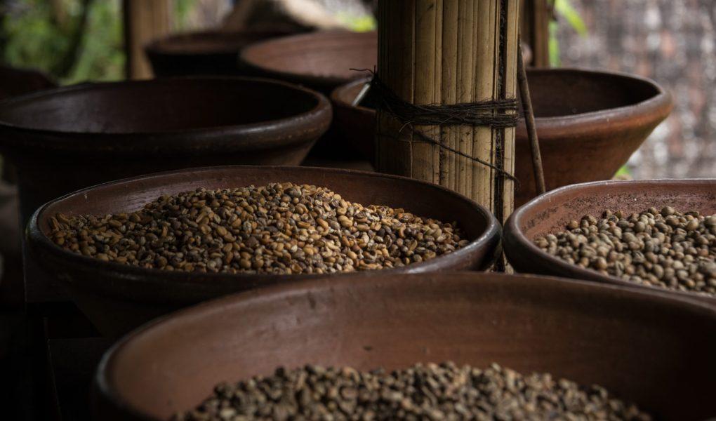 coffee-robusta-arabica-global-supply-chain-disruption-internet-bull-report