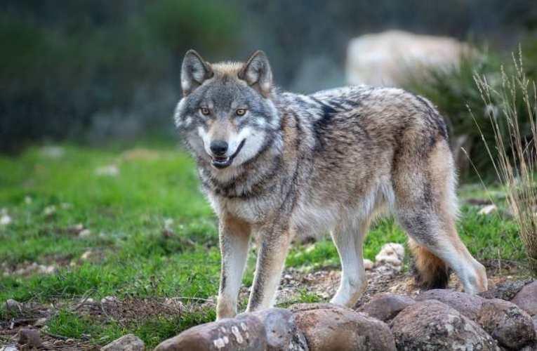 Mayer Gábor: Vona, a farkas – És a többiek, a minden másképp van ciklusból