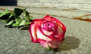 Dürre Rose am Boden