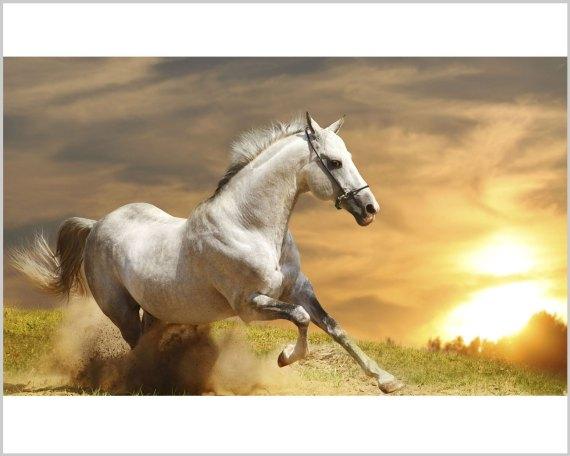 Stampa su tela-cavallo che corre