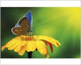 Stampa su tela-farfalla