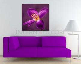 stampa su tela-meraviglioso tulipano