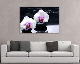 Stampa su tela-candide orchidee bianche