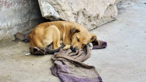 perros-callejeros-777x437