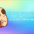 RECOMENDACIONES PARA PROTEGER A TUS MASCOTAS DE LAS BAJAS TEMPERATURAS