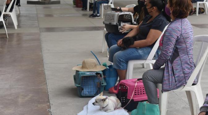 LLEVAN A CABO LA CAMPAÑA DE ESTERILIZACIÓN DE MASCOTAS EN MONTEMORELOS, N.L.
