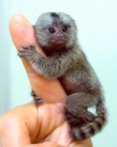 Here are 12 of the cutest animals you never knew existed!