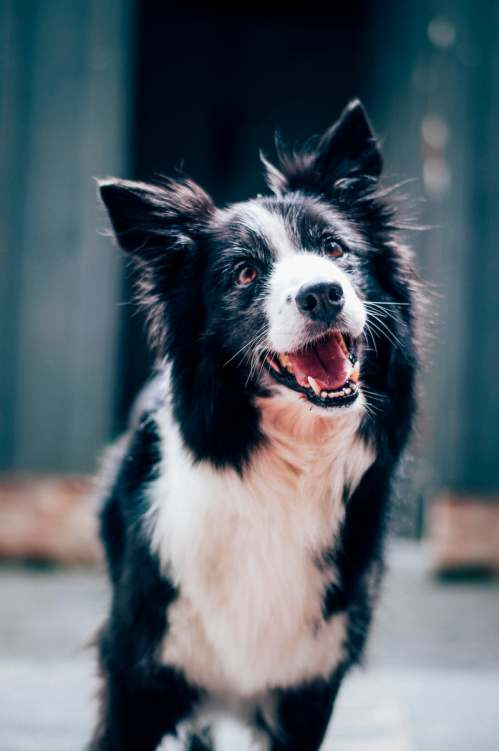 What Dog You Should Get Based On Your Sign