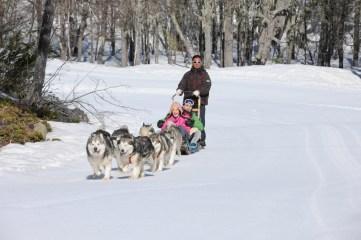Trenós puxados por cães