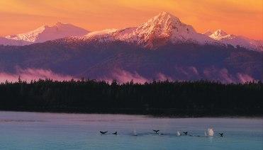 Alasca 13
