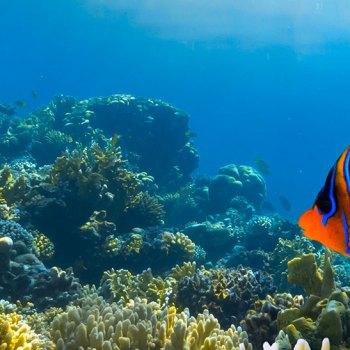 O mar do Caribe, na América Central