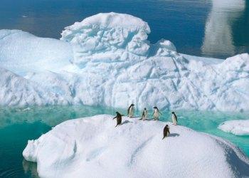 Cruzeiros América Latina & Antártida | L'Austral