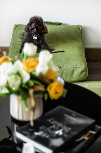 LaSivoliere-Dog-Service