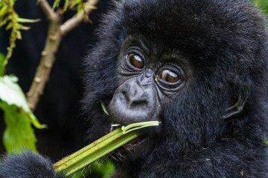 Wilderness-Rwanda-06