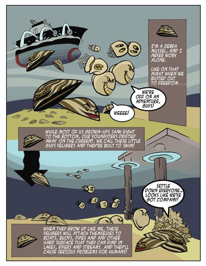 invasive_species_cartoon_zebra_mussel_900