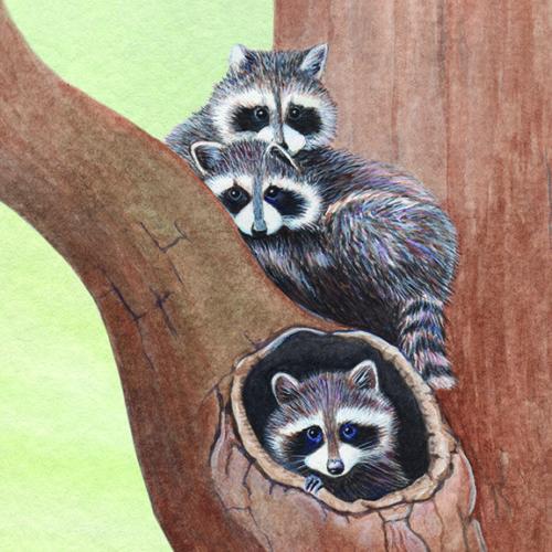 web_bpa-raccoon-pups