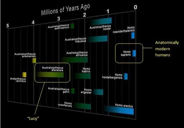 lucy human timeline
