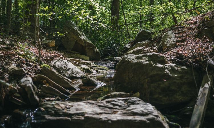 Rocks and the glory of God (Credit: Rebecca Hankins at SEBTS)