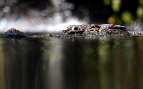 95230603 gettyimages 153283775 1 - Man found dead in suspected crocodile attack in Australia