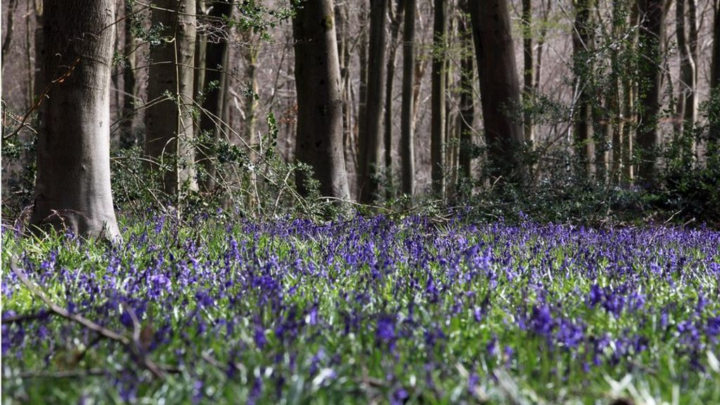 95241061 gettyimages 143001803 - 'Step change' needed to create more woodland