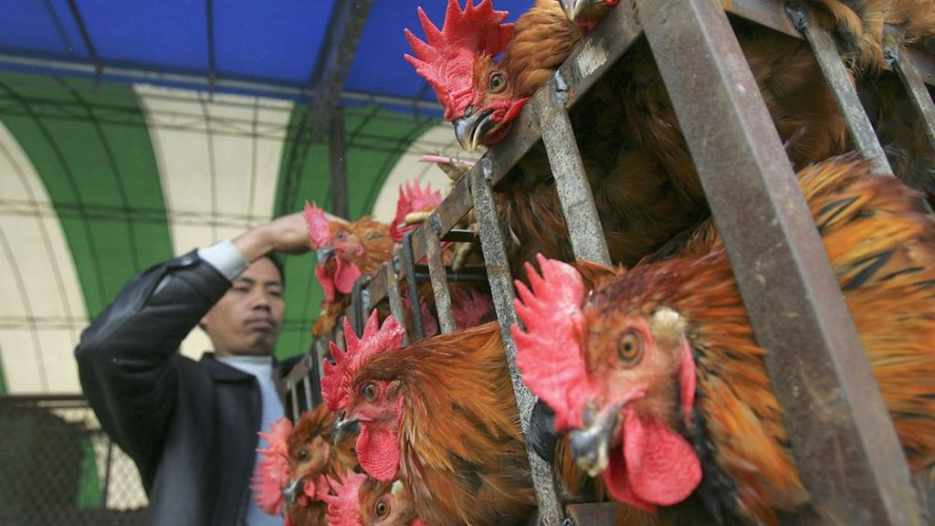 95253050 gettyimages 56084027 - Tiny genetic change lets bird flu leap to humans